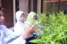 Mahasiswa Unesa Desain Obat Antikanker Payudara dari Tanaman Endemik Indonesia
